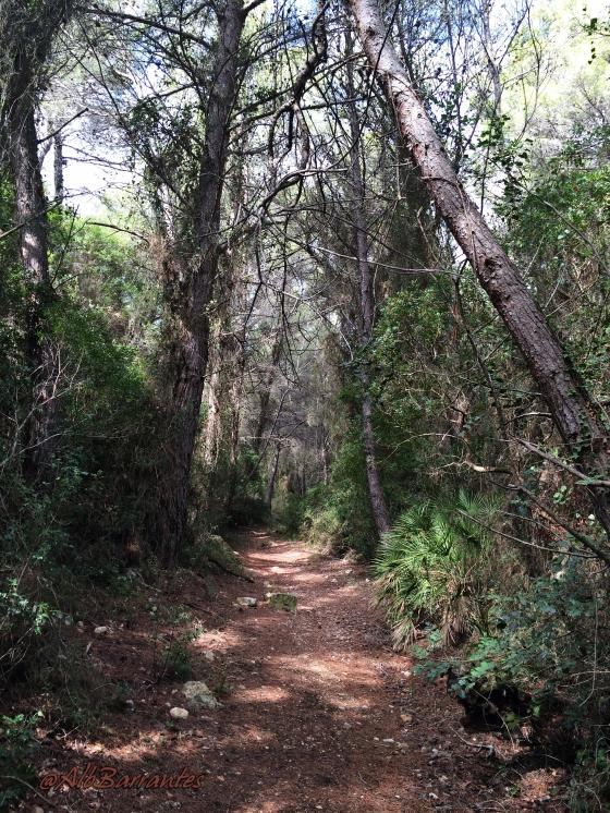 Sierra adentro, subiendo a la Fuente de la Parra.